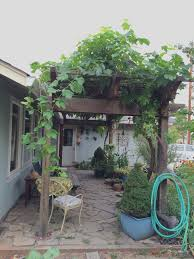 tips for growing and pruning table grapes in the home garden