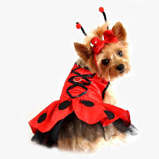 doggy ladybug halloween costume pictures photos and images for