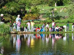 Kirstenbosch Botanical Gardens Kirstenbosch National Botanical Garden Things To Do In Cape Town