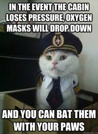 funny cats airline pilot meme dump a day very funny memes