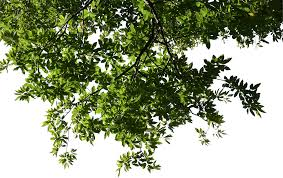 deciduous branch 03 free texture download by 3dxo com