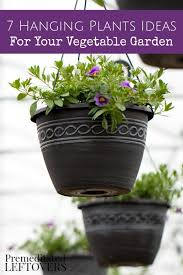 hanging plant ideas for your vegetable garden