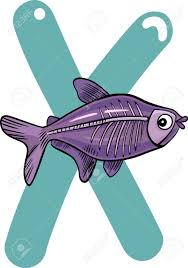 cartoon illustration of x letter for x ray fish royalty free