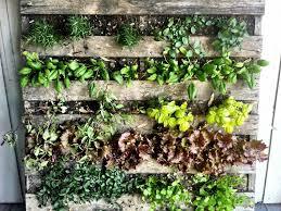 Diy Vertical Herb Garden Download Diy Vertical Pallet Garden Solidaria Garden