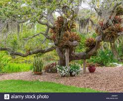 Selby Botanical Garden Selby Botanical Gardens In Sarasota Florida Stock Photo