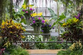 the orchid show chicago botanic garden 17 best 1000 ideas about