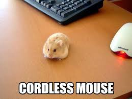 Mouse Memes - the cordless mouse was a great invention pest control memes