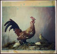file louis ducos du hauron still life with rooster google art