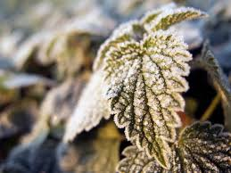 hoarfrost on a leaf free stock images by libreshot