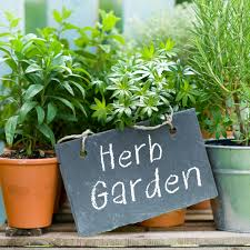 7 ornamental herbs to soften hardscapes pro tips ideas