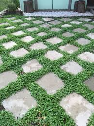 16x16 Patio Pavers Home Depot by Low Maintenance Ground Cover Dichondra Seeds Between Pavers