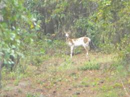 Best Deer Hunting Blinds The Best Cheap Or Low Priced Deer And Turkey Hunting Ground Blinds