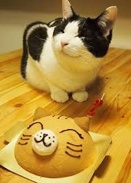 Meme Birthday Cake - cat is ecstatic about its happy birthday cake