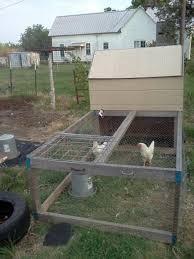 guest post backyard hens advon