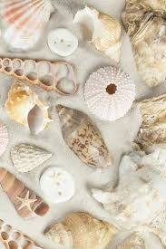 515 best seashore life images on pinterest sea shells shells
