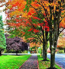photo of fall colors on microsoft campus redmond wa redmond