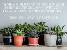 best house plants best houseplants for purifying indoor air