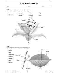 plant anatomy worksheet free worksheets library download and