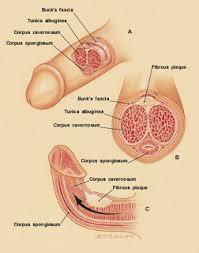 lintah papua pembesar penis jadikan keluarga anda seharmonis mungkin