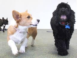 Canine Creature Comforts Western Ny U0027s Best Dog And Cat Boarding Dog Daycare Luxury Pet
