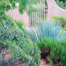 easy care desert landscaping ideas