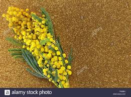 Angebote F K Hen Mimose Stockfotos U0026 Mimose Bilder Alamy