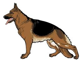 german shepherd coloring pages free black and white german shepherd clipart cliparts and others art