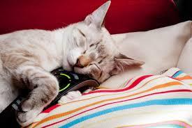 gatti divani le unghie gatto ed il difficile rapporto con poltrone e divani