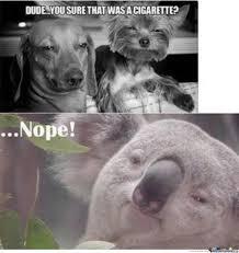 High Koala Meme - koala bear by aussiekid meme center