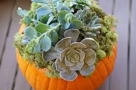 diy home decor tutorial pumpkin succulent centerpiece