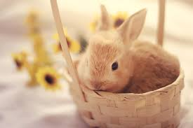 bunny basket bunny in a basket by aoao2 on deviantart