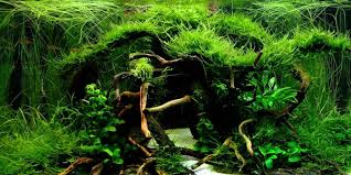 Best Substrate For Aquascaping Understanding Jungle Aquascaping Style The Aquarium Guide