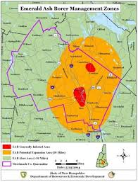 emerald ash borer map update emerald ash borer in hshire taking for