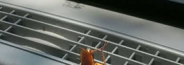 how to shoo car interior at home 4 easy ways to kill roaches in your car pestwiki