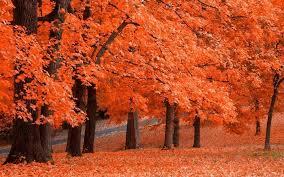 imagenes de otoño para fondo de escritorio fondos de pantalla vivo otoño para android descargar gratis
