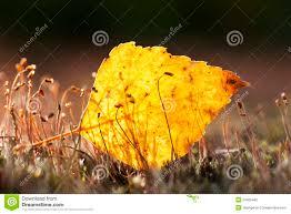 autumn orange colour leaf stock photography image 34906482