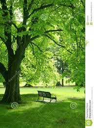 empty bench in green garden stock images image 22551504