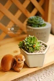 202 best garden succulents in pots images on pinterest succulent