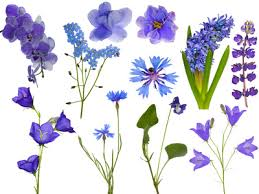 different types of purple different types of flowers flower types monocots and dicots