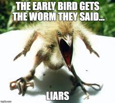 Angry Bird Meme - angry bird imgflip