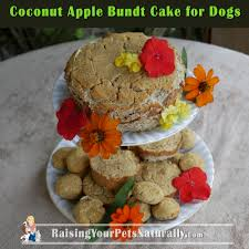 coconut apple bundt cake for dogs raising your pets naturally
