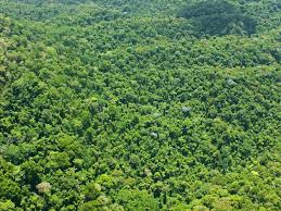 Under Canopy Rainforest by Ciudad Blanca Honduras Lidar Images Business Insider