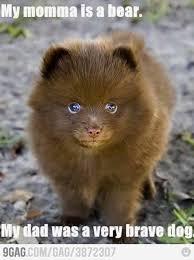 Funny Cute Animal Memes - 10 funny animal memes laugh 4 humor