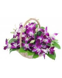 Purple Orchids Send And Order Fresh Orchid Flowers Get Same Day Home Delivery