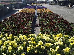 Winter Vegetable Garden Southern California Southern California Gardens Get Their Best Start In Autumn