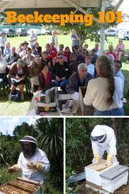 790 best bees images on pinterest bee keeping honey bees and