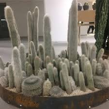 Seeking Cactus Cast 13 Best Planters Images On Plant Container Plants And