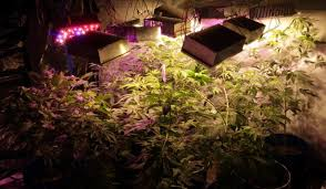 Best 25 Marijuana Grow Lights by 10 Diy Led Grow Lights For Growing Plants Indoors U2013 Home And