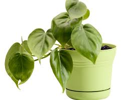 Best Low Light Indoor Plants by 5 Best Plants For Your Office