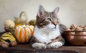 10 thanksgiving foods your or cat really should not eat